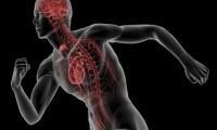 Acidi grassi: benefici e differenze Omega 3,6 e 9